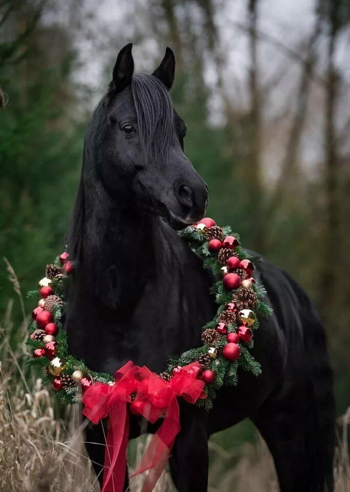 новые красивые картинки с лошадьми руке