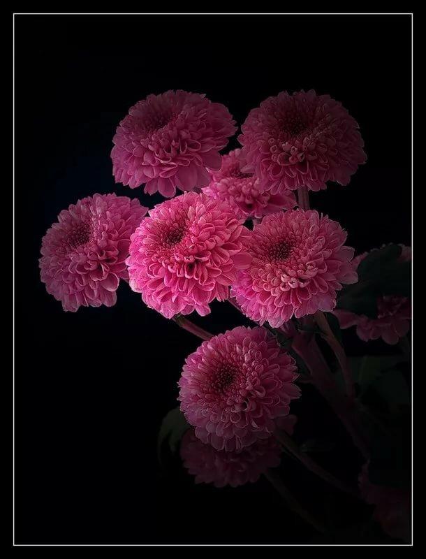 Цветы хризантемы картинки гиф, сюрприз
