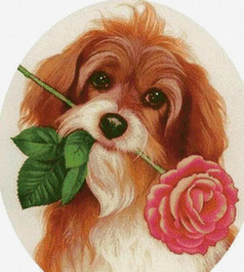 Надписью, открытки с щенками на день рождения
