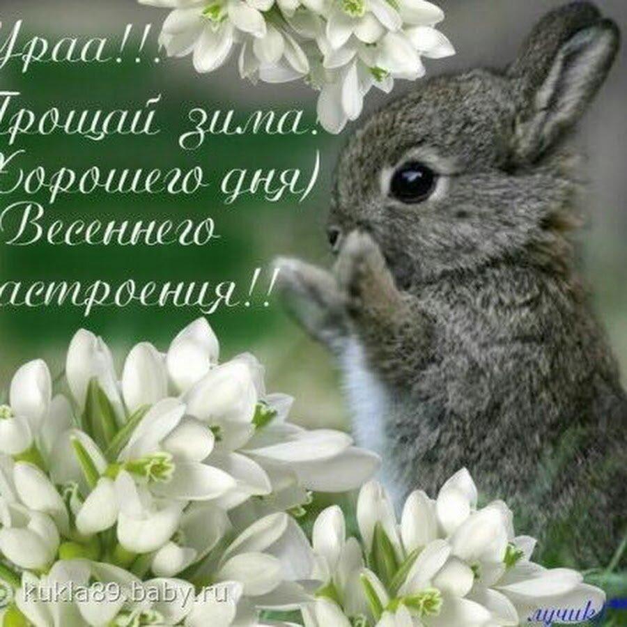 Подруга, открытки с началом весны