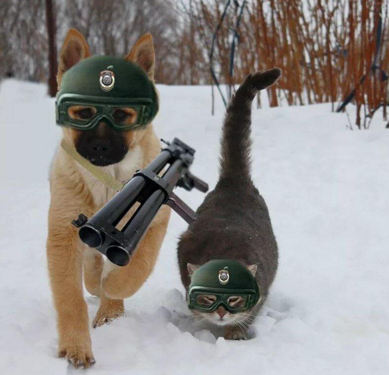 Коты прикольные картинки 23 февраля