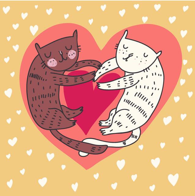 Парень, с 14 февраля картинки с кошками