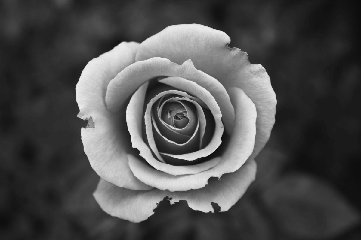 Cool black and white pictures