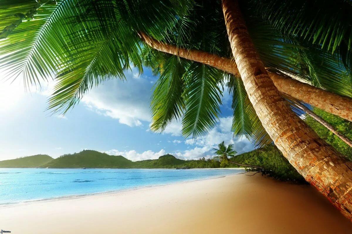 Пальма море картинки