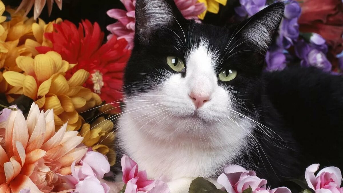 Цветы и коты картинки, картинках мужским