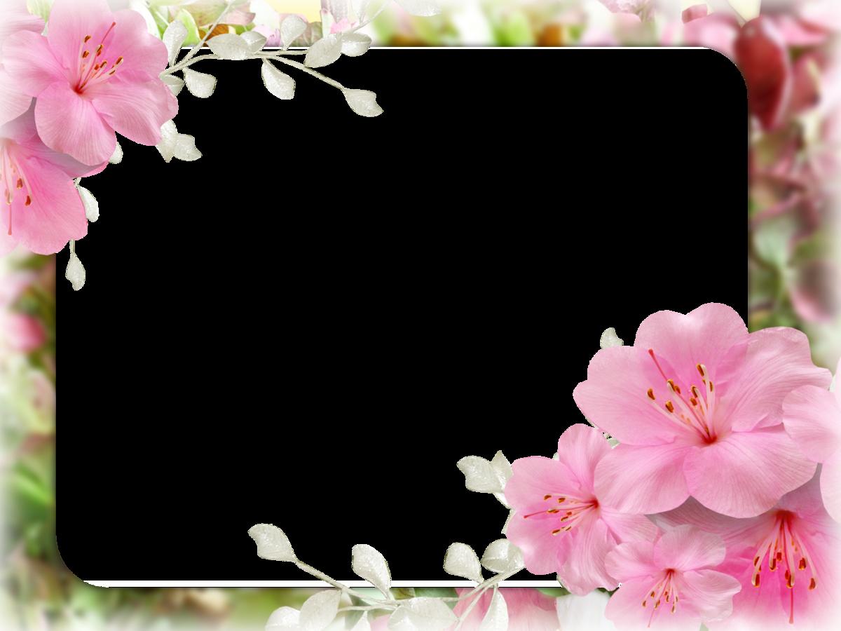 Открытки, картинки для открыток на белом фоне
