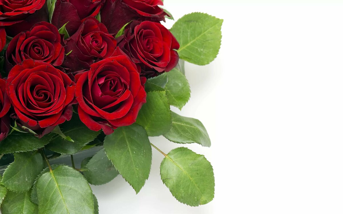 Цветы красивые картинки для поздравлений