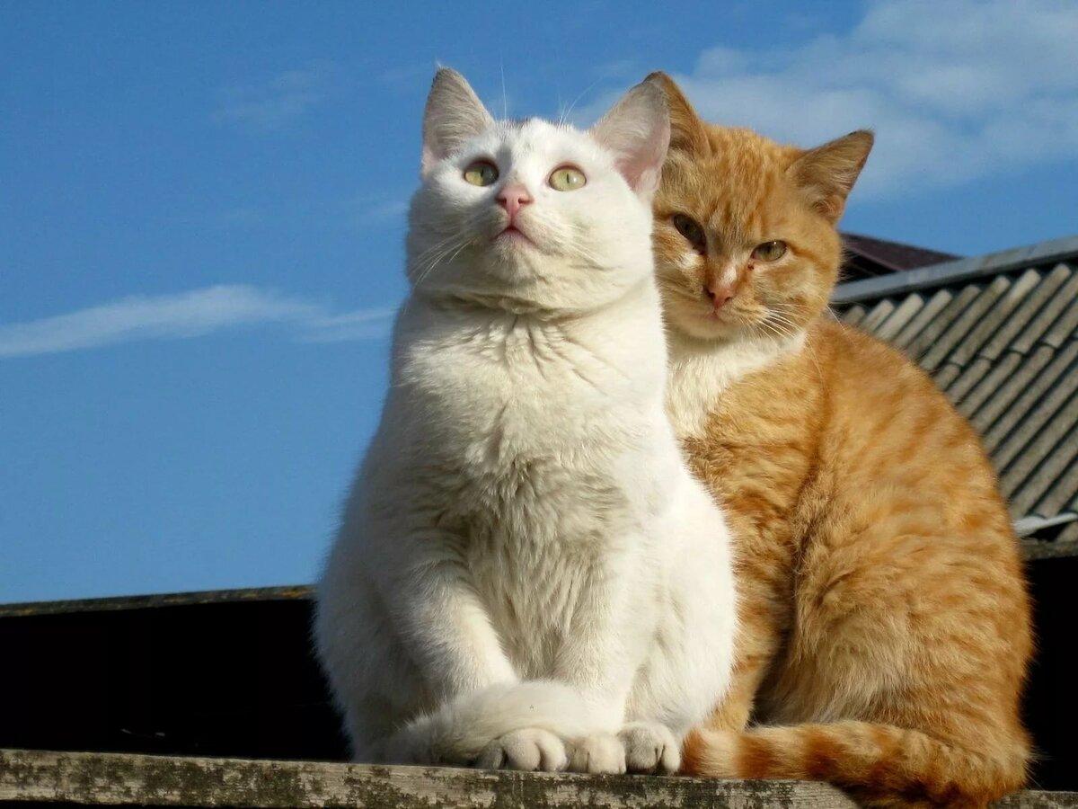 картинка кошек вместе