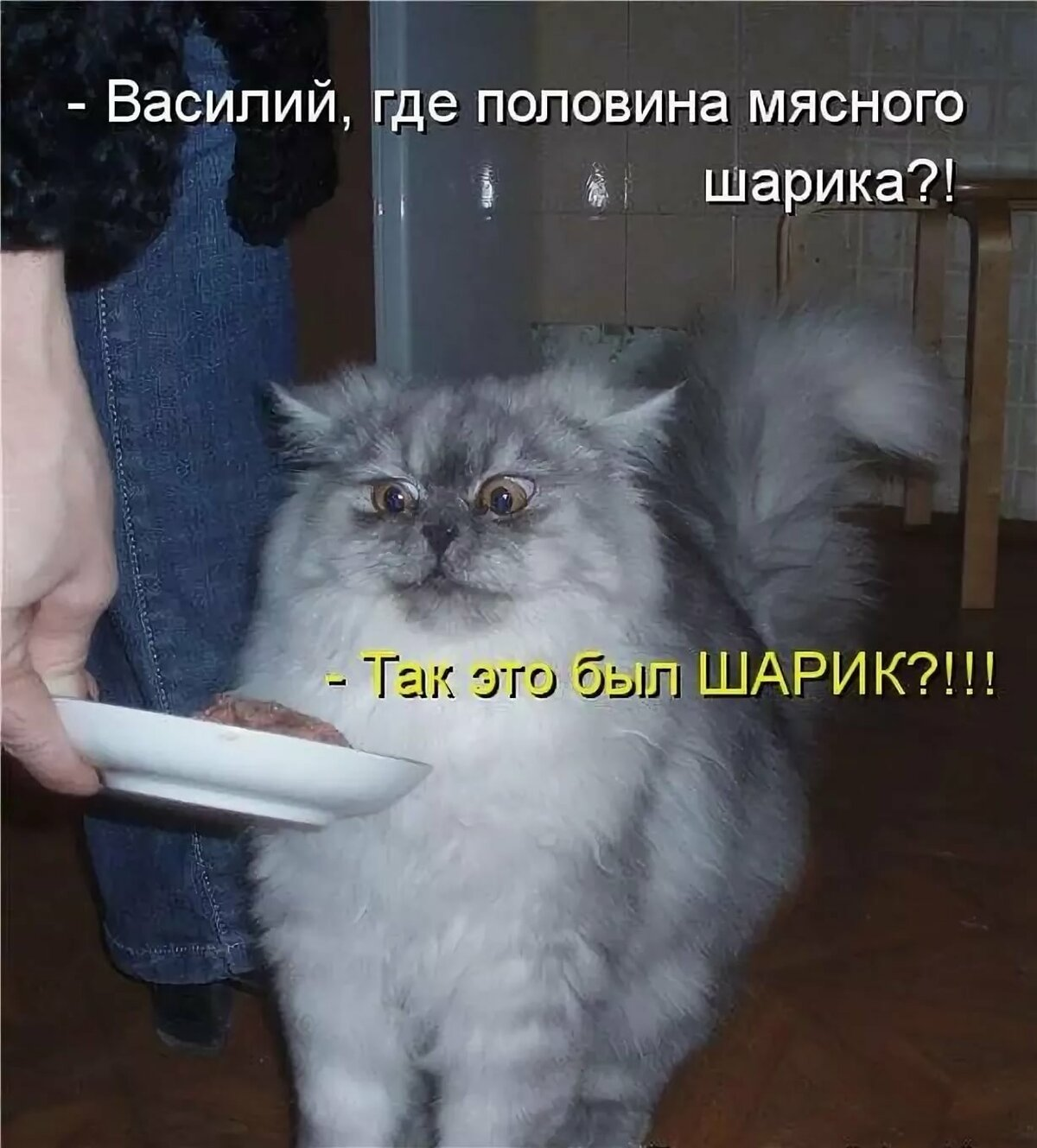 Фото кота прикольное с надписью