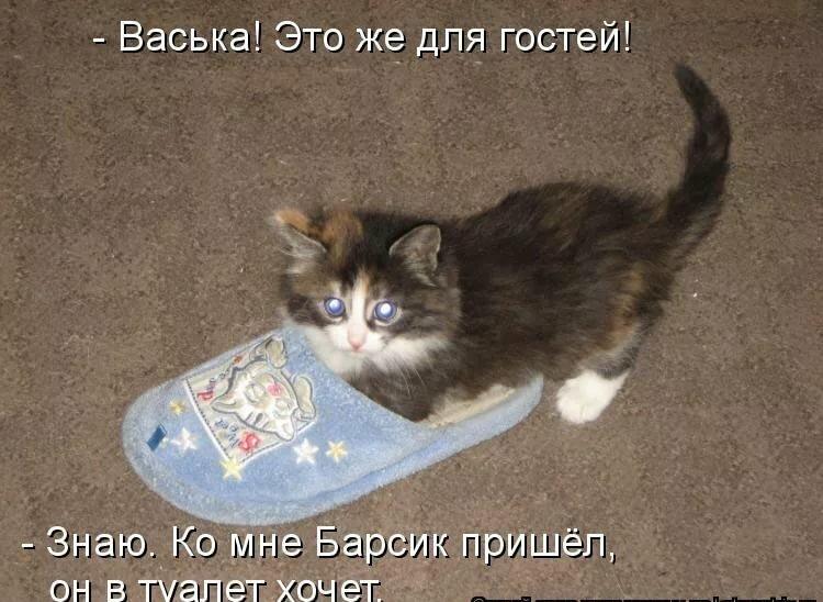 Картинки смешные стихи про котиков