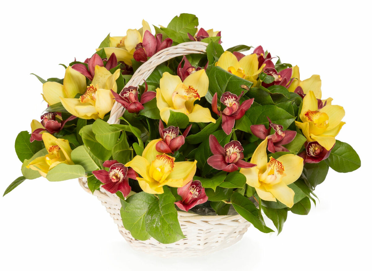 Букеты цветов, букет орхидеи в корзину москва