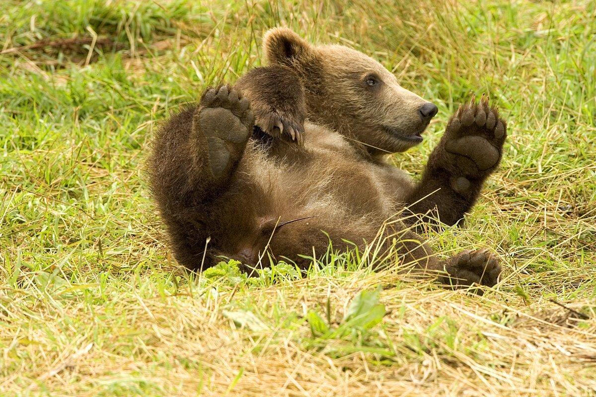 волосы картинки добрые медвежата видели такие модели