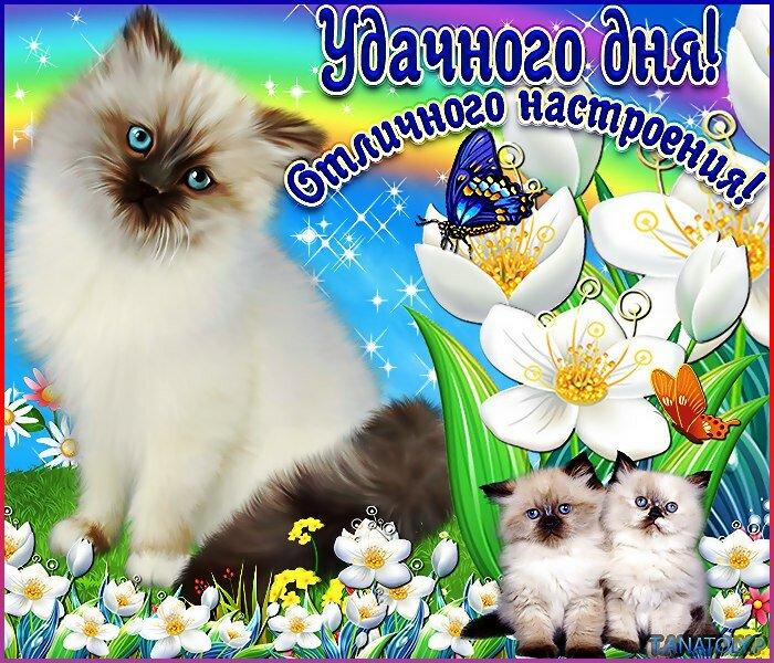 Пожелать удачного дня картинки, открытки день народного