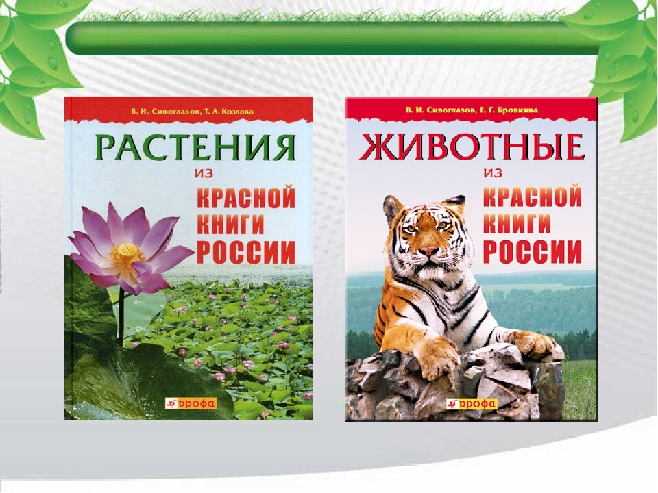 картинки из красной книги животные и растения россии этой причине