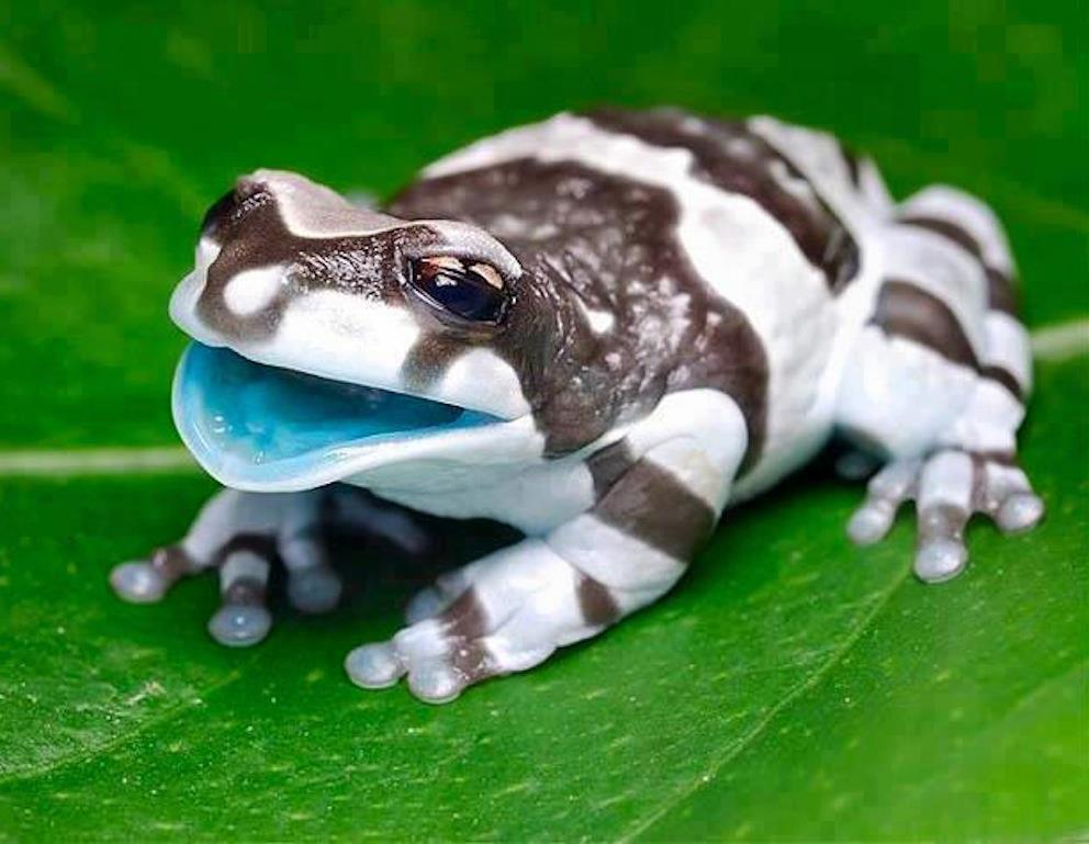 картинки самых необычных животных редких увидите картинки