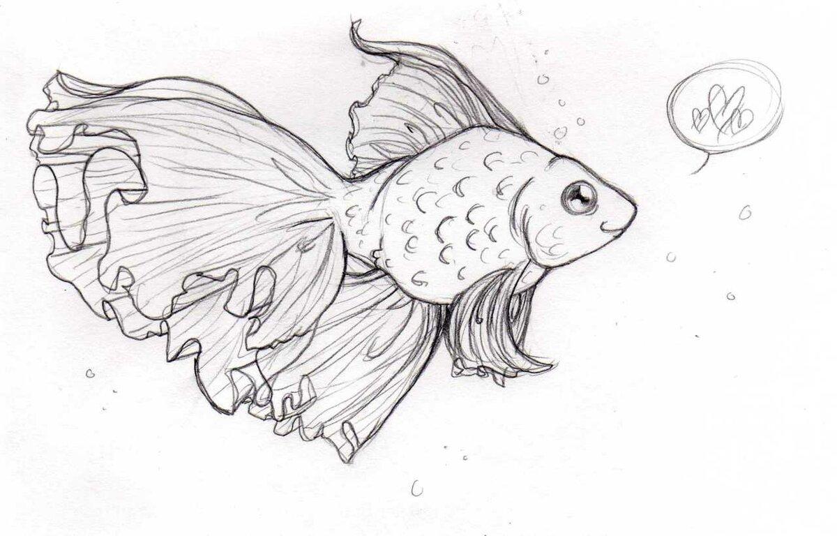 Картинки рыбы в карандаше