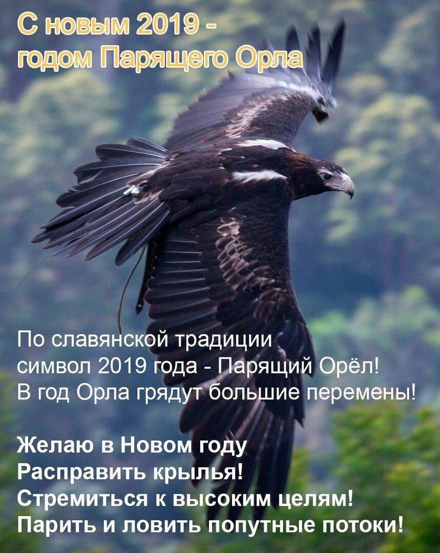 Видео поздравление с годом парящего орла