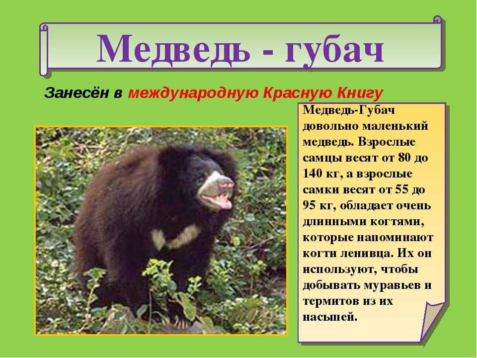 Для друзей, картинки животных из красной книги с описанием