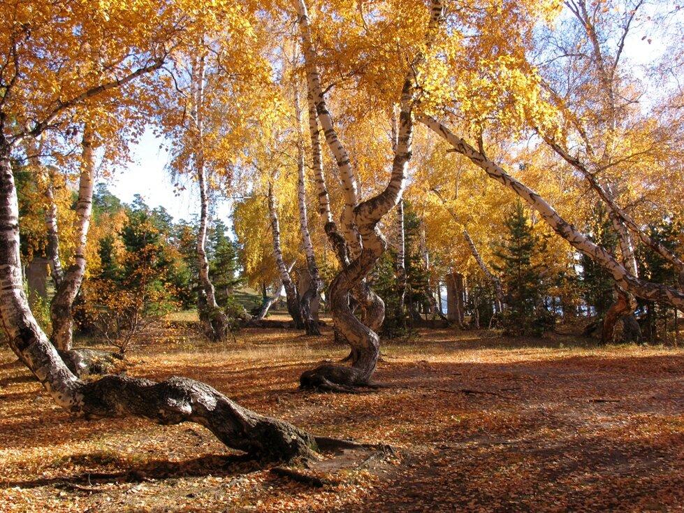 свет, ода, осенние пейзажи казахстана фото убийства подтвердили следственном
