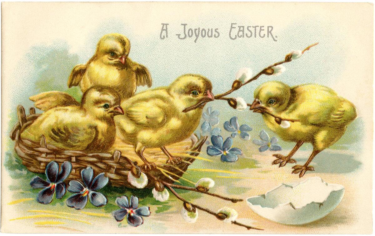 фотокружки цыплята открытки игра