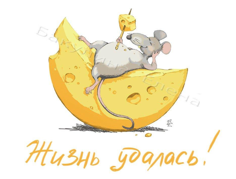 Картинки, смешные картинки о сыре