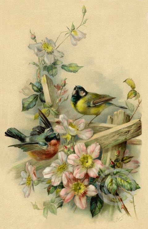 Открытки птичек, поздравления февраля