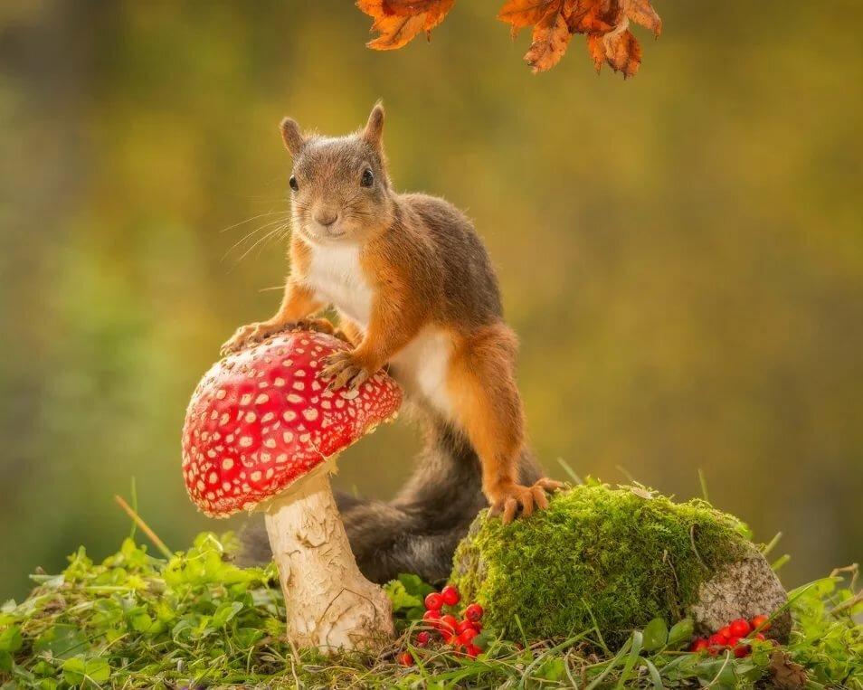 осень смешные животные цветок
