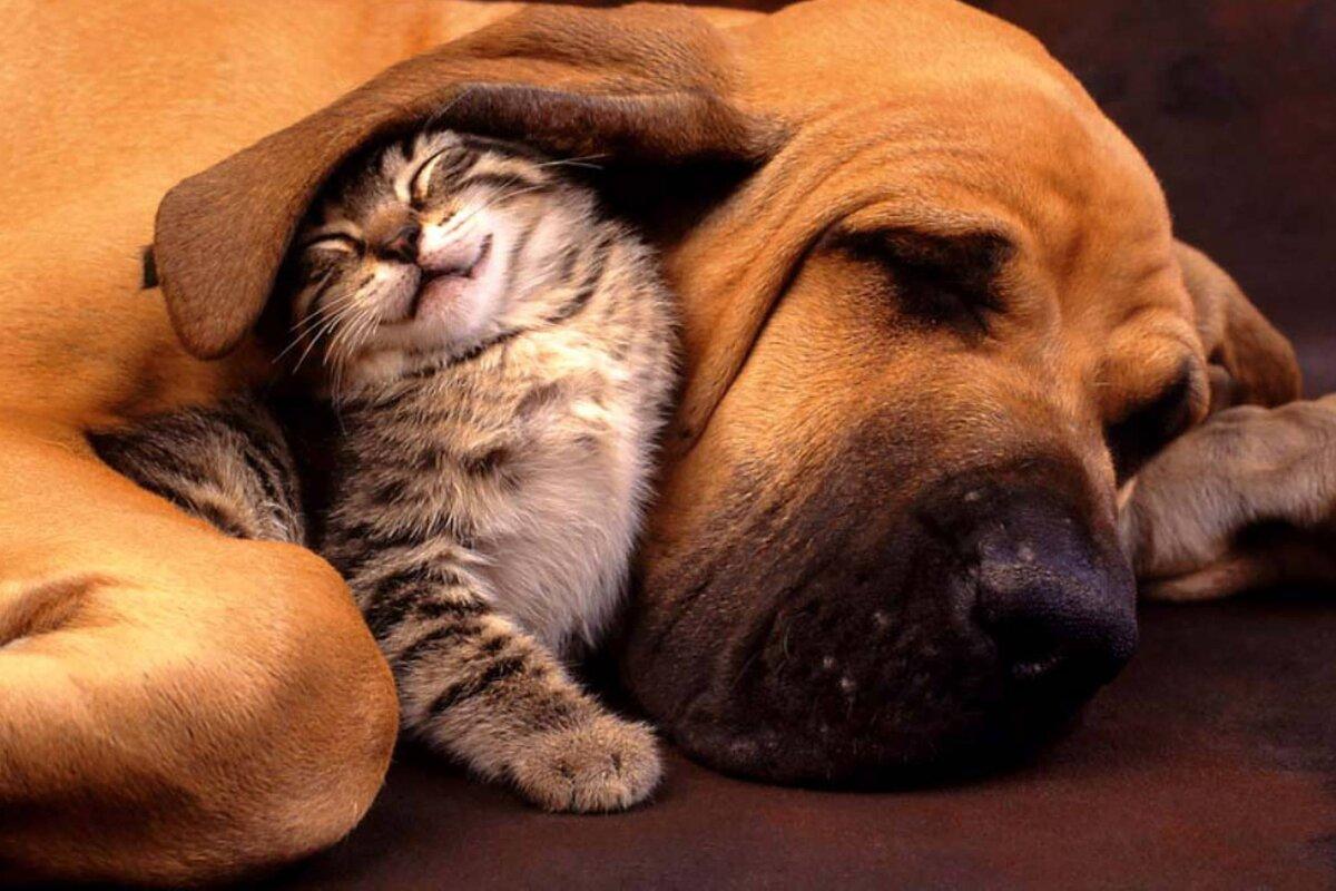 Прикольные картинки с кошкой и собакой