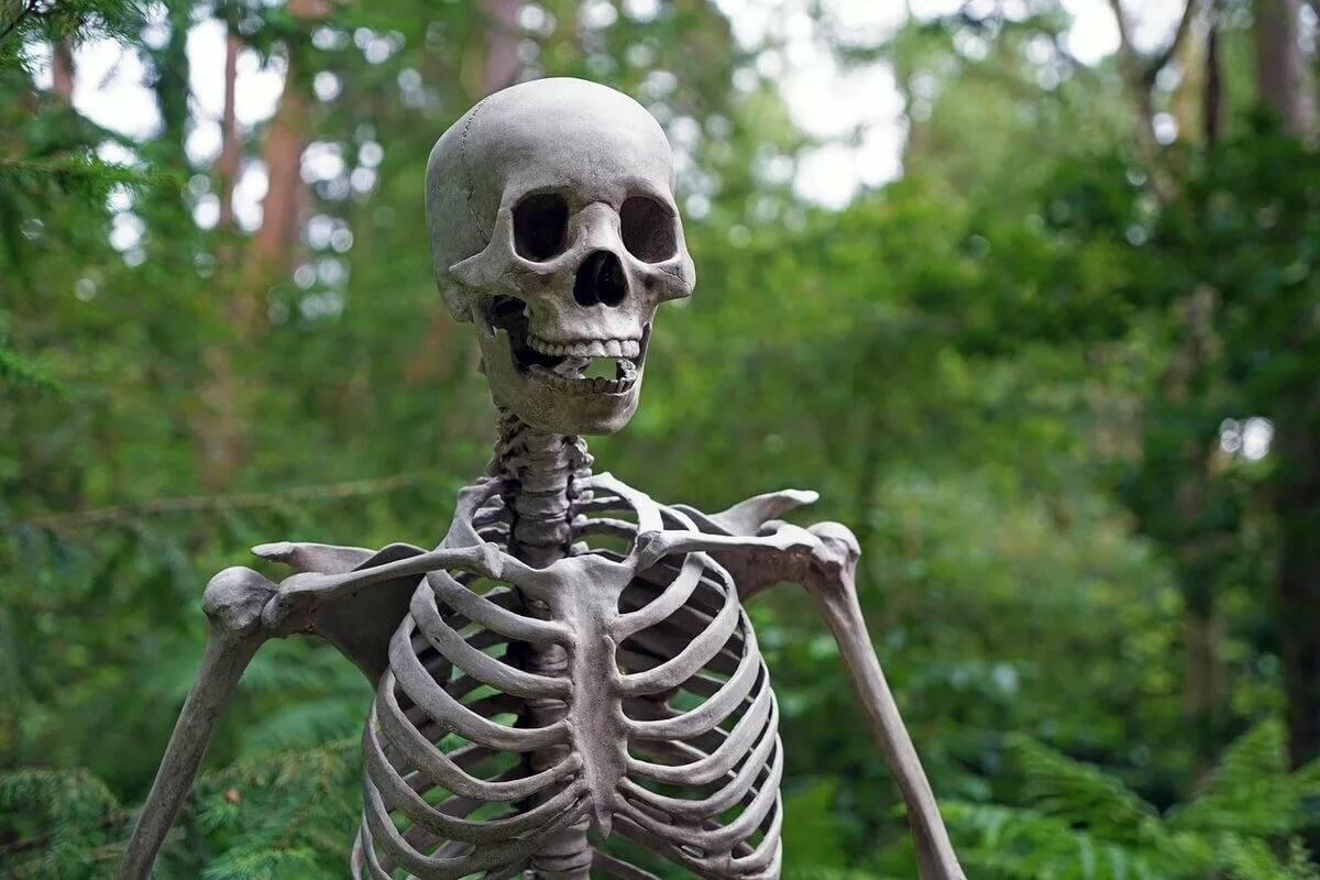 Смешные картинки со скелетами