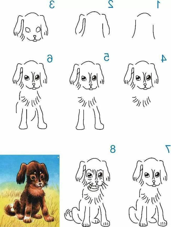 Рисунки собак поэтапно для начинающих