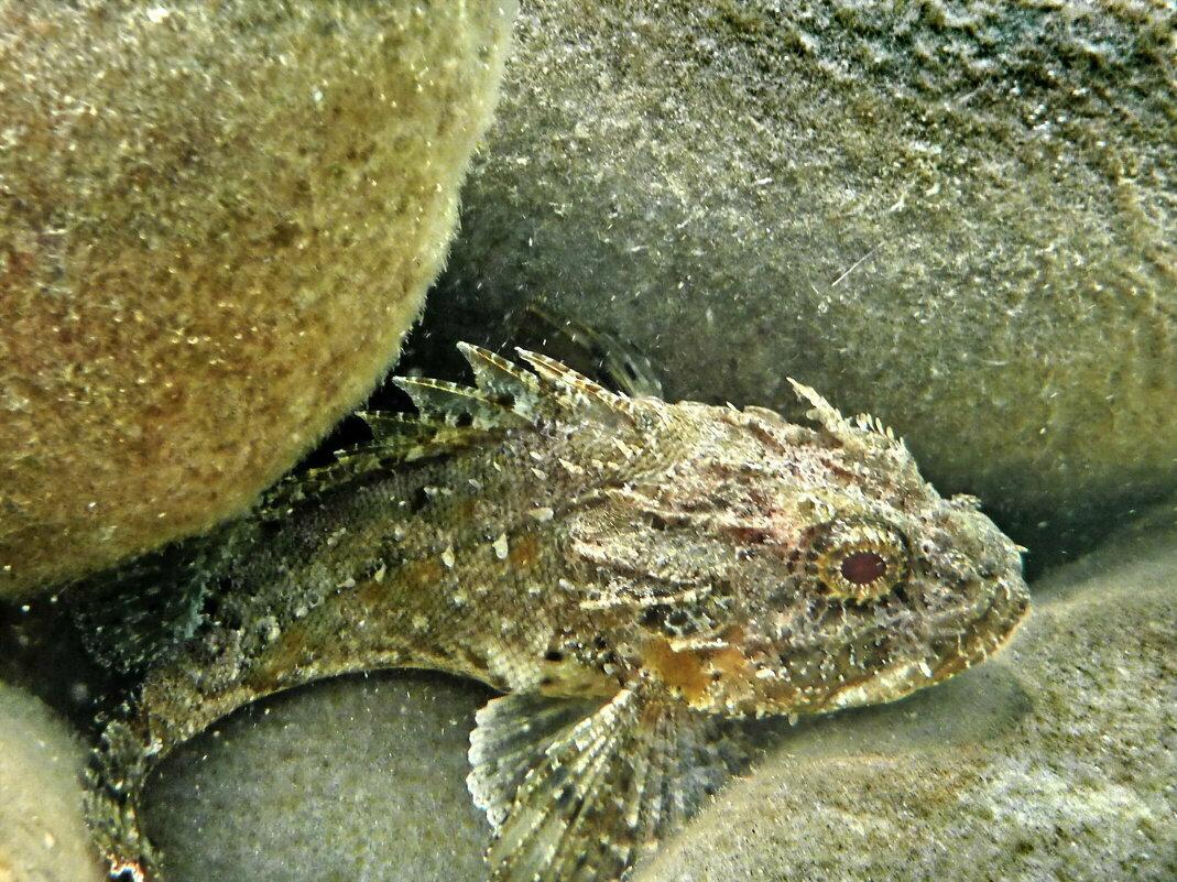Обитатели черного моря фото и названия крым