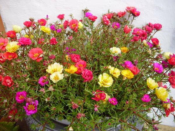 Розы красные фото цветов букет лучшие позы