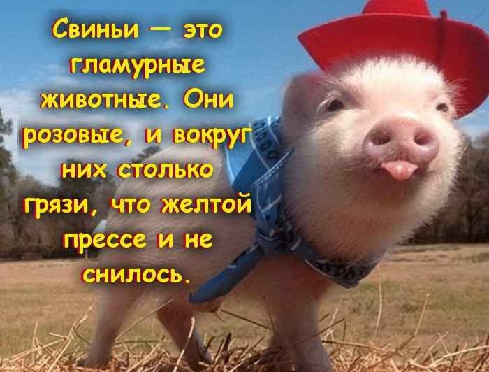 статусы в картинках про новый год свиньи нюанс всю
