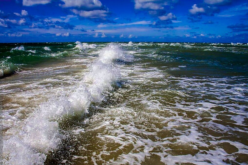 Рохлевый скат фото в океанариум счастью
