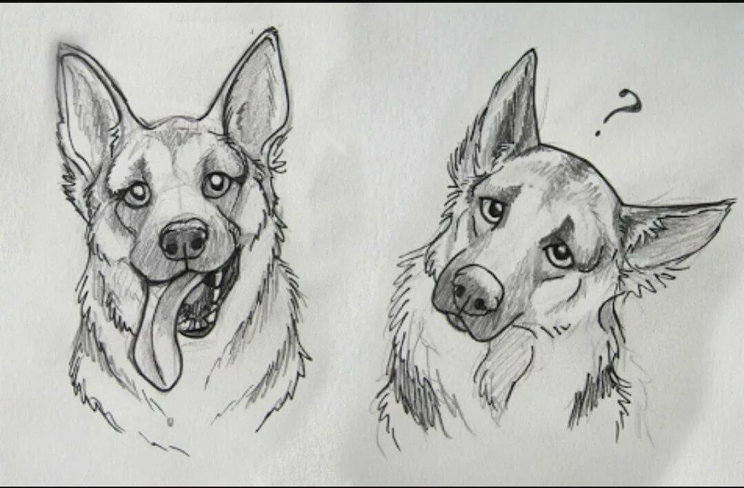 Крутые рисунки собак карандашом, картинки большие