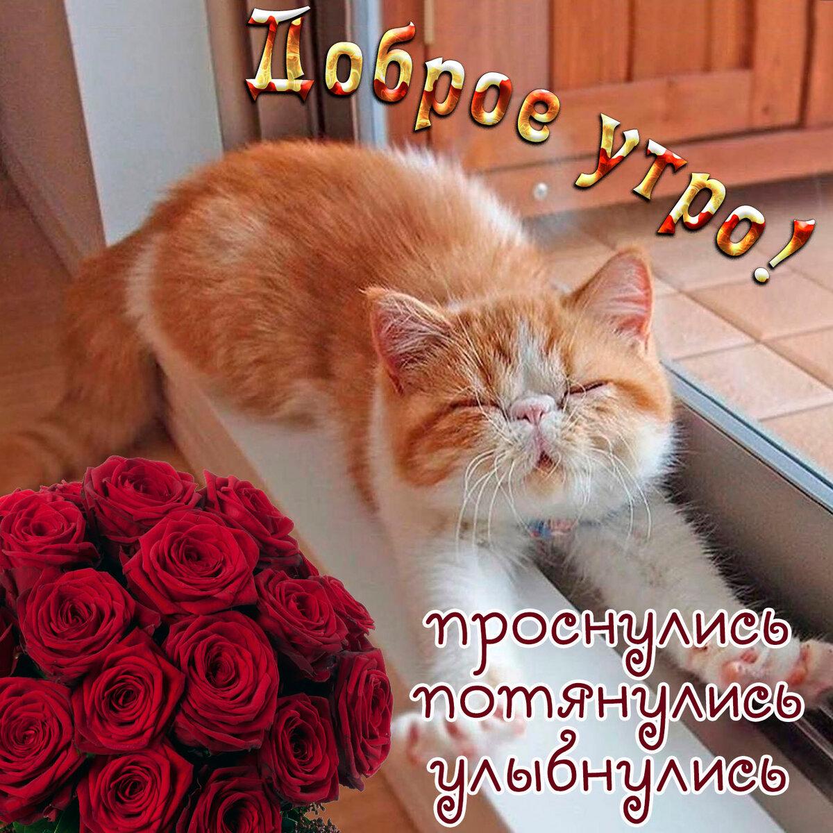 Фото с кошками и надписями доброе утро, одноклассники вставить