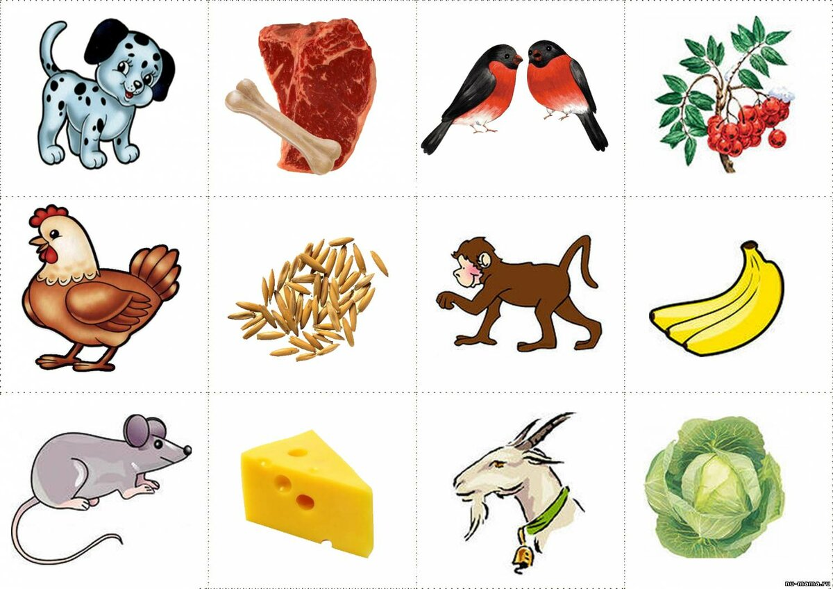 Чем питаются домашние животные в картинках для детей, утро прикольные картинки