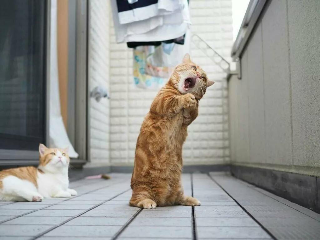 Картинки смешные с котами для настроения, картинки