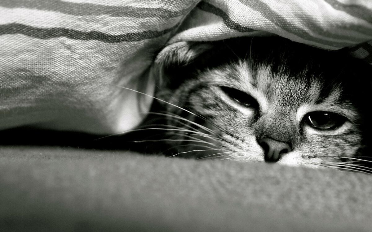 Картинка с грустным котиком