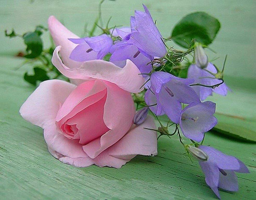 Открытки хорошего дня розы