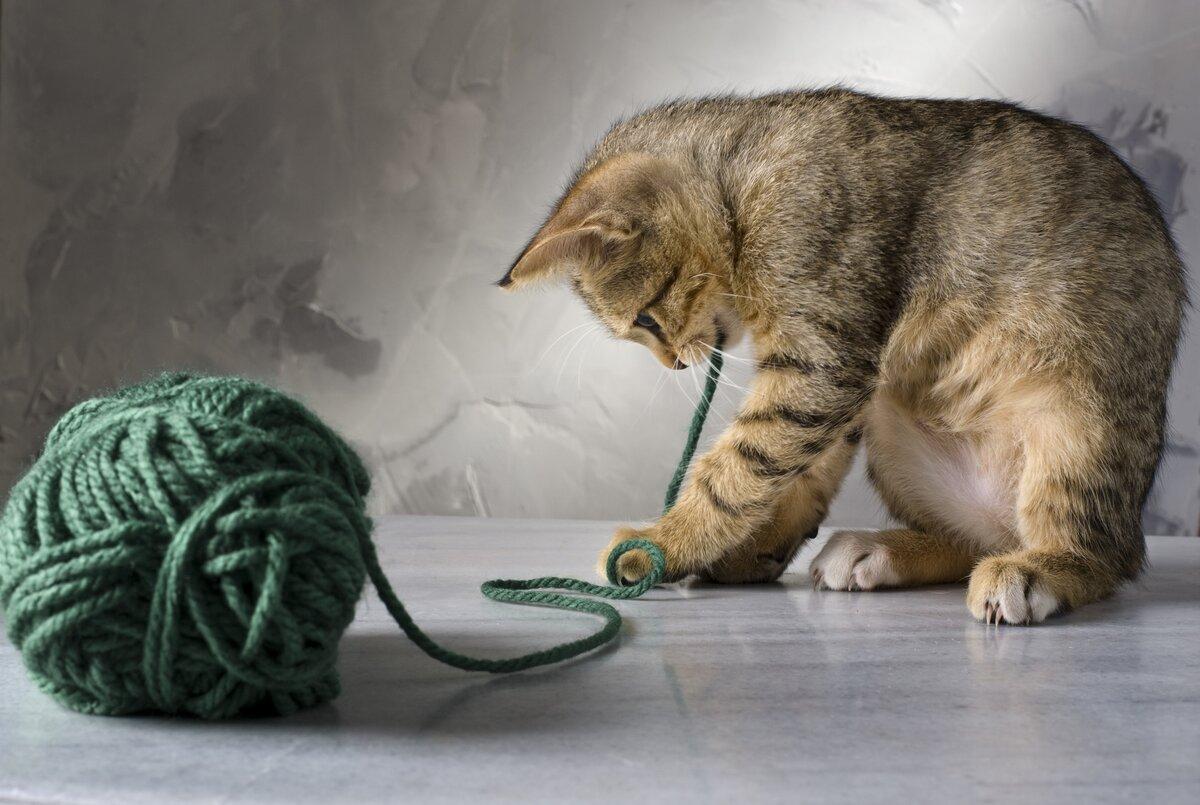 Прикольные, картинка с котиком