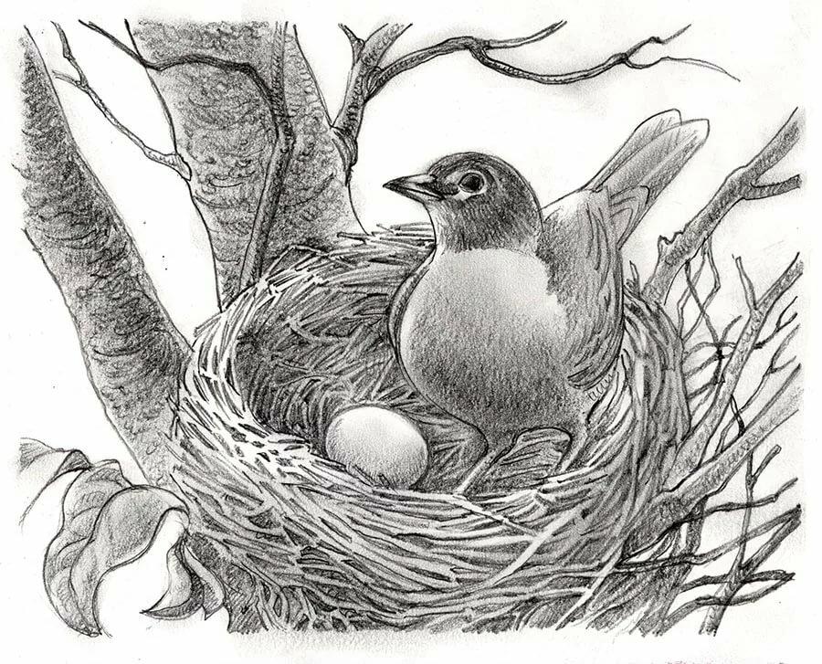 картинки диких птиц простым карандашом красивую