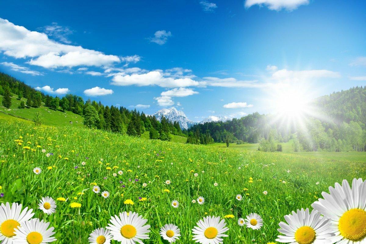 Летняя картинка солнце