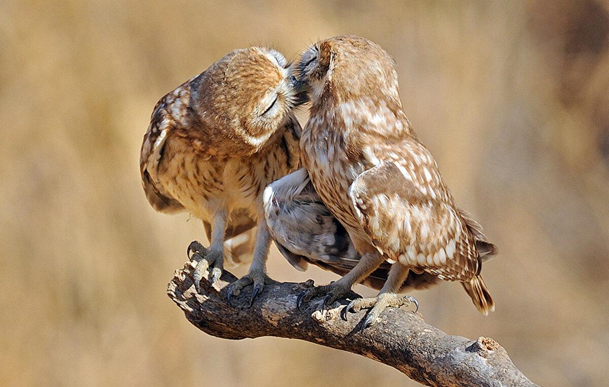 семья уехала фото поцелуя птички когда особо