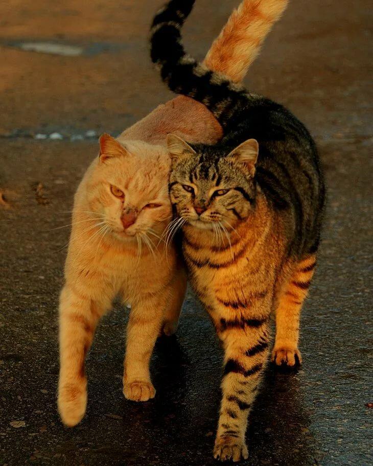 Крещением приколы, любовь и кот прикольные картинки