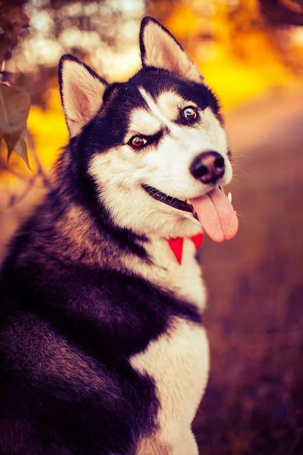 Красивые картинки на аву собаки