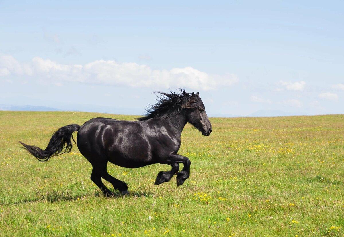 Картинки лошади черной
