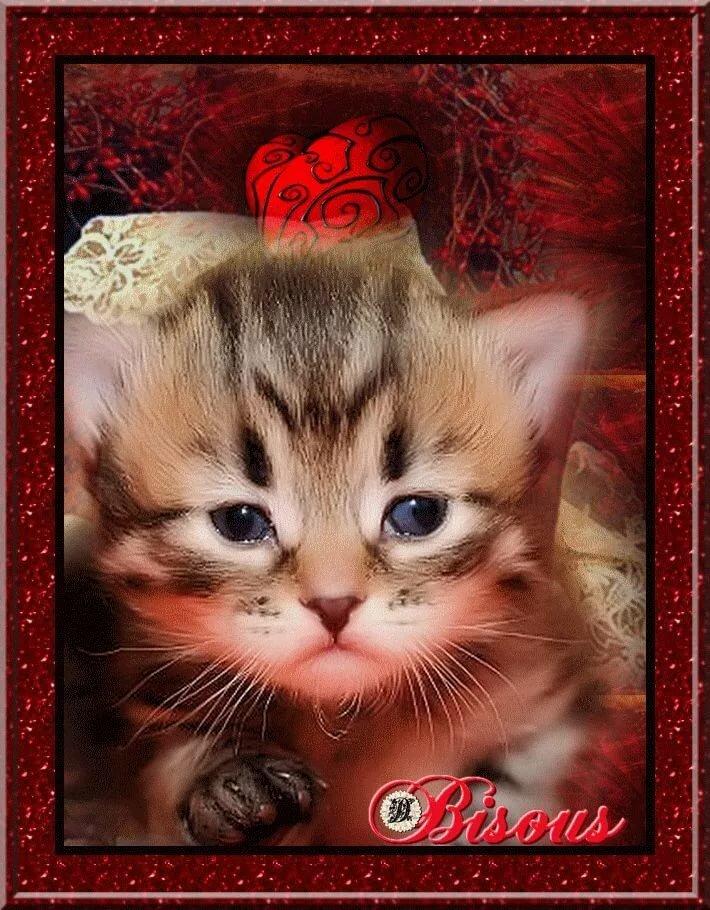 картинки кошки красивые анимация нашу