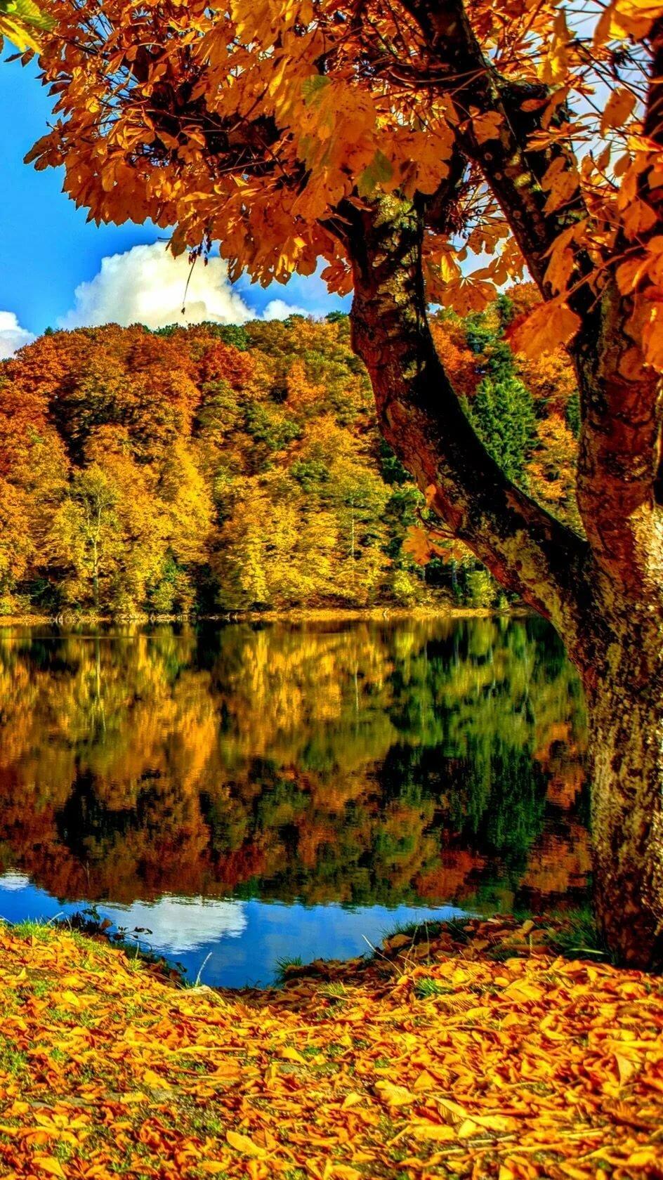 Красивая осень фото на мобильный
