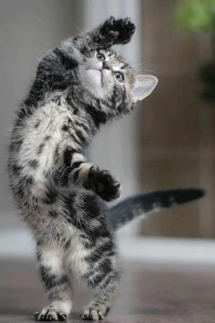 Тобой, картинки смешных котят и кошек
